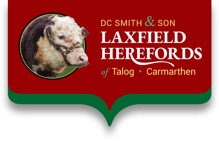 DC Smith & Son | Laxfield Herefords